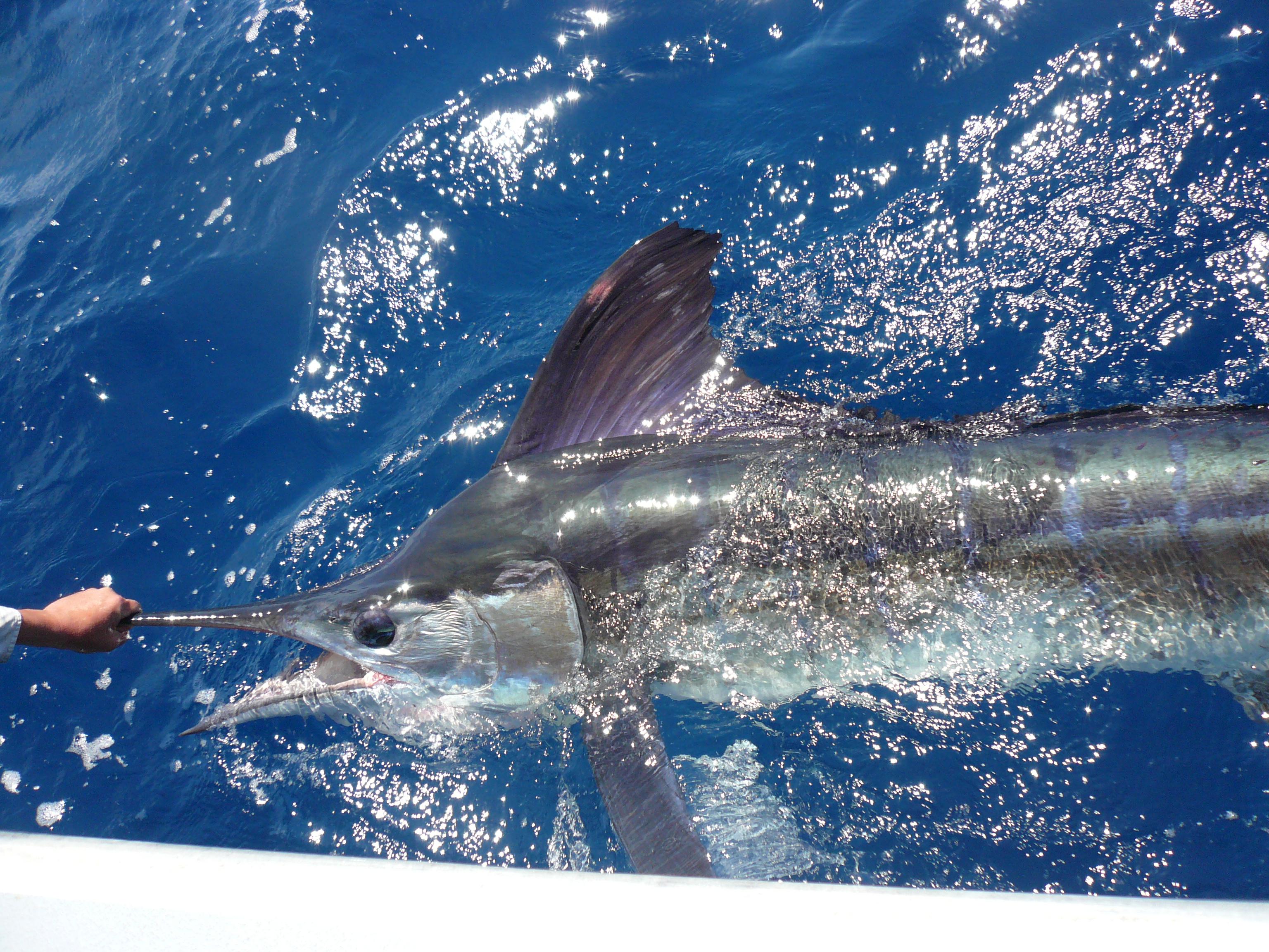 headland-fishing-charters-48